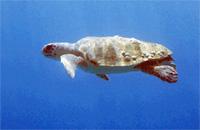 Черепахи Закинф